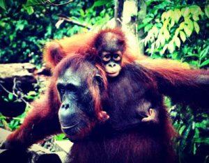 Taman Nasional Tanjung Puting, Si Cantik nan Mendebarkan 5