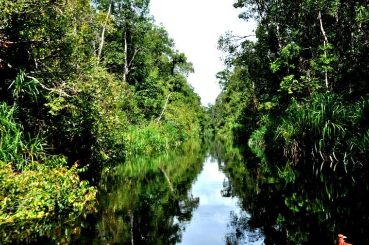 Taman Nasional Tanjung Puting, Si Cantik nan Mendebarkan