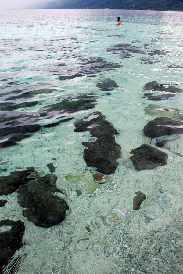 Wisata Pulau Tiga Ambon Maluku 5