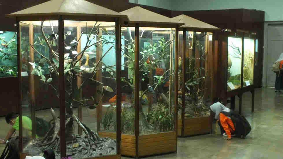 Zoologi Museum di Bogor dengan beribu jenis faunanya