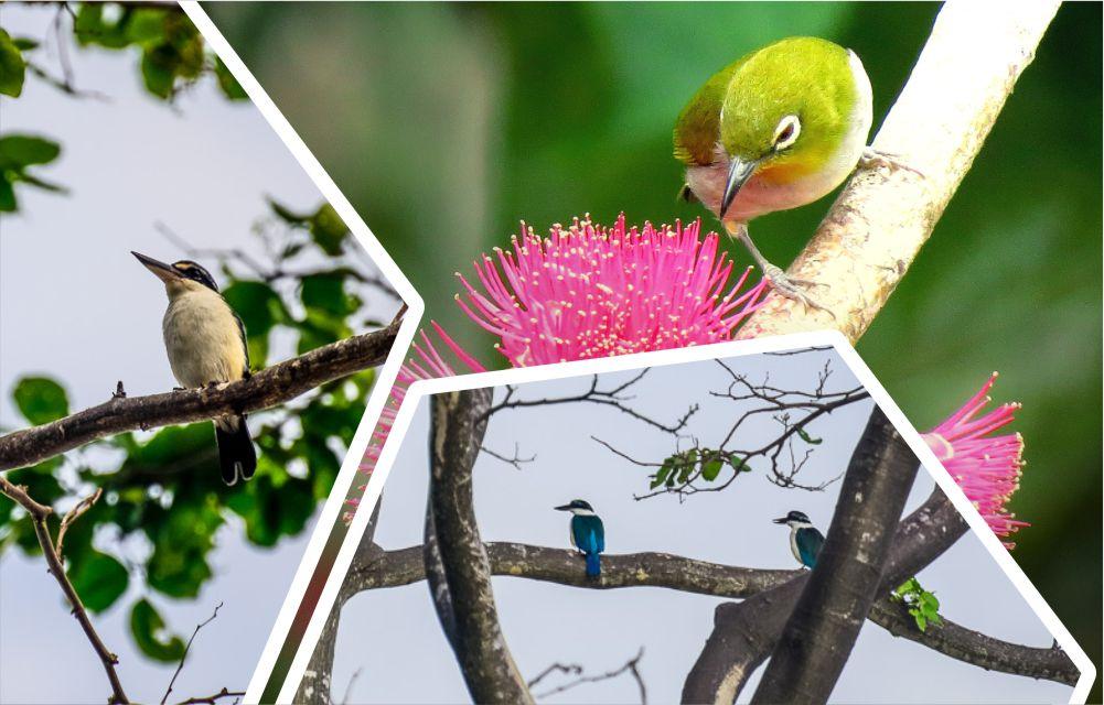 burung di pulau enggano