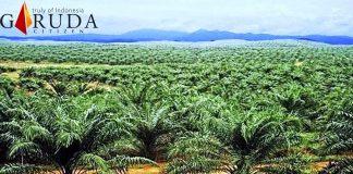 PT.SIL Diduga Merambah 648 Ha Lebih Hutan Produksi