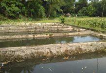 Kolam Kelompok Tani Desa Rimbo Recap