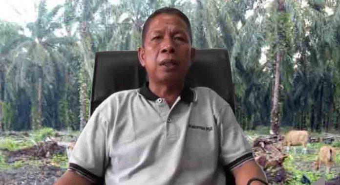Soal Replanting Sawit di Bengkulu Utara, Begini Kata Sasman