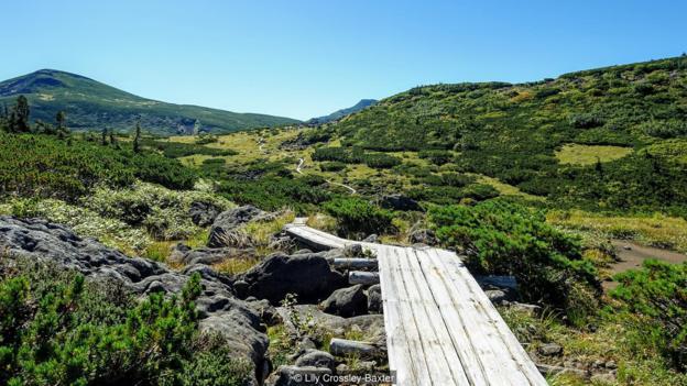 Papan kayu melindungi flora alpine dan memberikan jalur yang jelas untuk pejalan kaki (Kredit: Lily Crossley-Baxter)